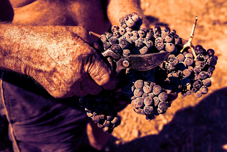 Il prestigio di un territorio nell'unicità dei suoi vini.
